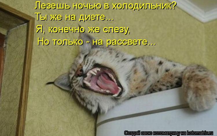 Котоматрица: Лезешь ночью в холодильник? Ты же на диете... Я, конечно же слезу, Но только - на рассвете...