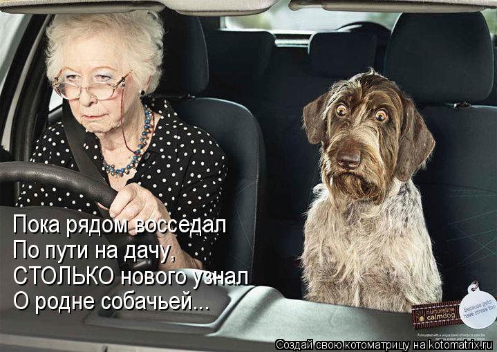 Котоматрица: Пока рядом восседал По пути на дачу, СТОЛЬКО нового узнал О родне собачьей...