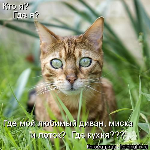 Котоматрица: Кто я? Где я? Где мой любимый диван, миска  и лоток?  Где кухня???