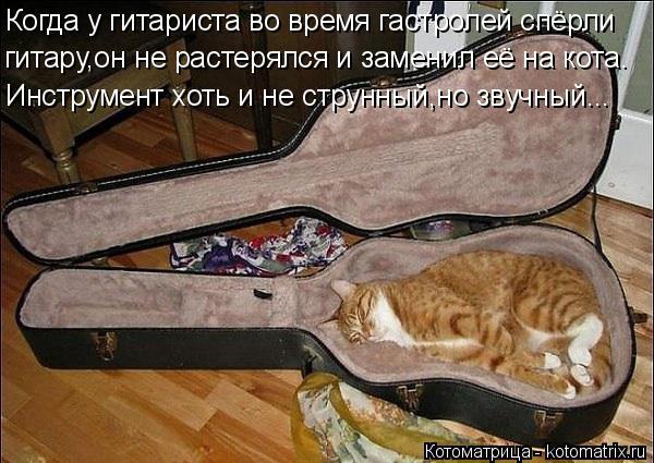 Котоматрица: Когда у гитариста во время гастролей спёрли гитару,он не растерялся и заменил её на кота. Инструмент хоть и не струнный,но звучный...