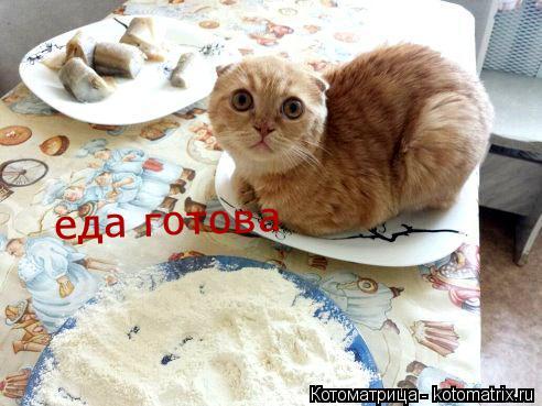 Котоматрица: еда готова