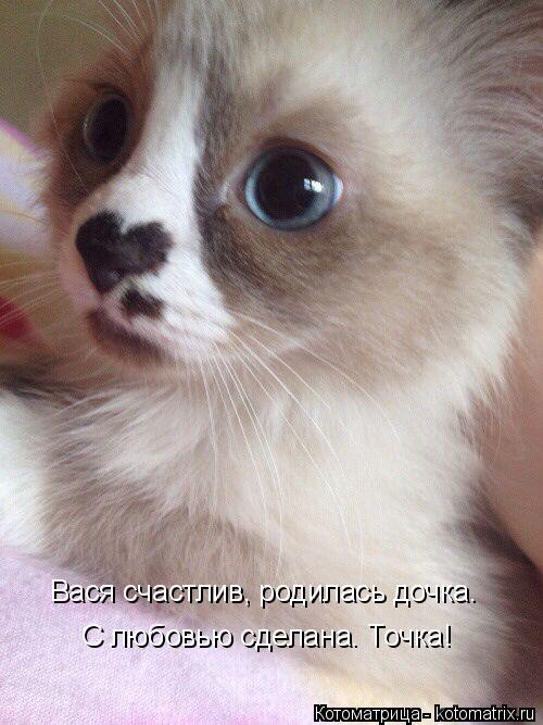 Котоматрица: С любовью сделана. Точка! Вася счастлив, родилась дочка.