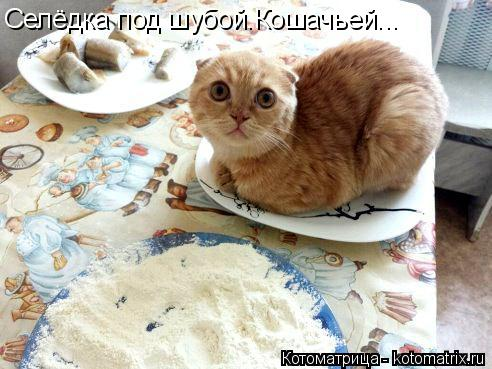 Котоматрица: Селёдка под шубой.Кошачьей...
