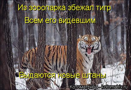 Котоматрица: Из зооопарка збежал тигр Всем его видевшим Выдаются новые штаны