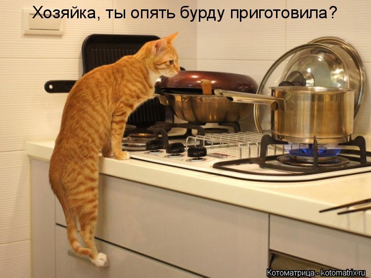 Котоматрица: Хозяйка, ты опять бурду приготовила?