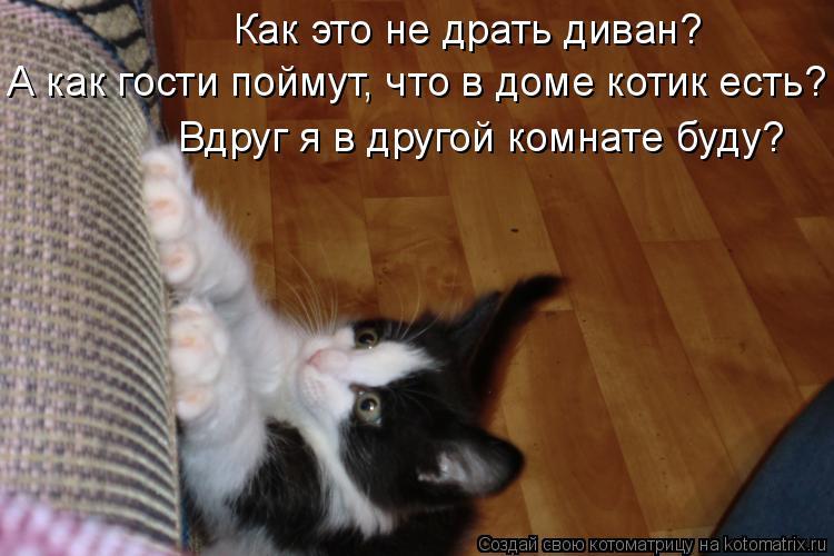 Котоматрица: Как это не драть диван?  А как гости поймут, что в доме котик есть? Вдруг я в другой комнате буду?