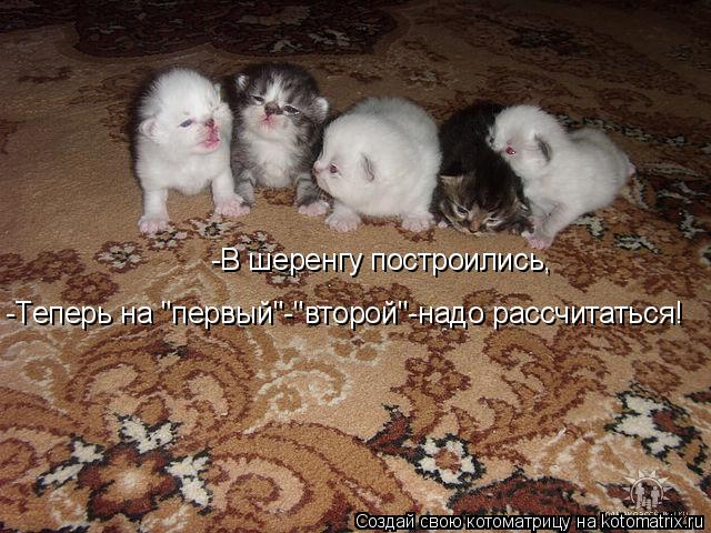 """Котоматрица: -В шеренгу построились, -Теперь на """"первый""""-""""второй""""-надо рассчитаться!"""