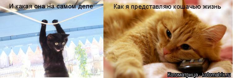 Котоматрица: Как я представляю кошачью жизнь И какая она на самом деле