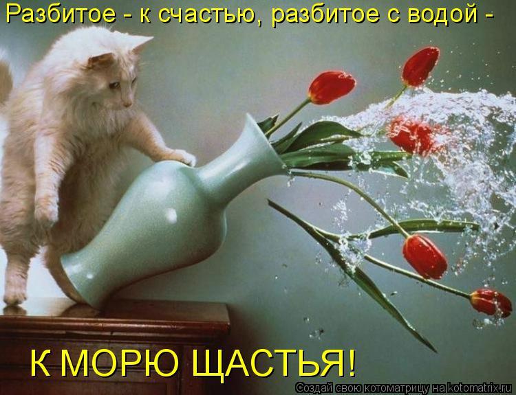 Котоматрица: Разбитое - к счастью, разбитое с водой - К МОРЮ ЩАСТЬЯ!