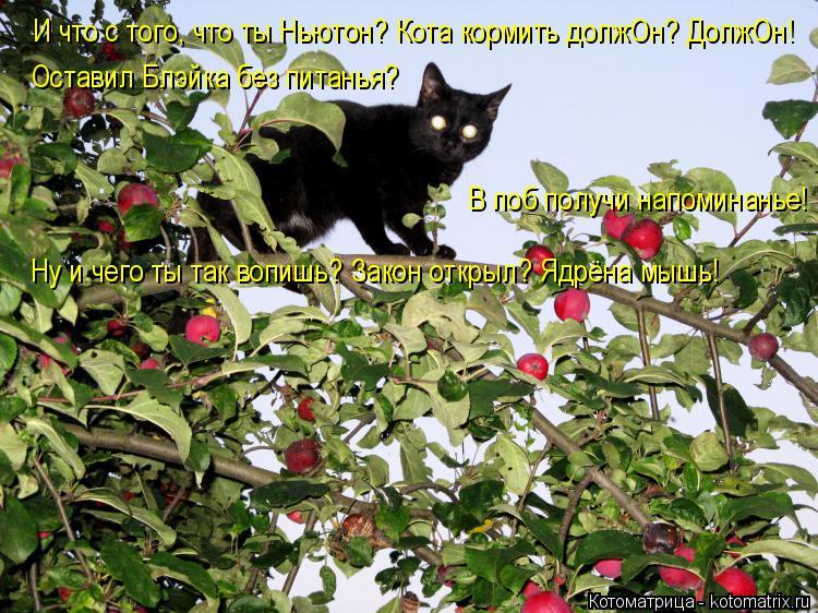 Котоматрица: И что с того, что ты Ньютон? Кота кормить должОн? ДолжОн! Оставил Блэйка без питанья? В лоб получи напоминанье! Ну и чего ты так вопишь? Закон о