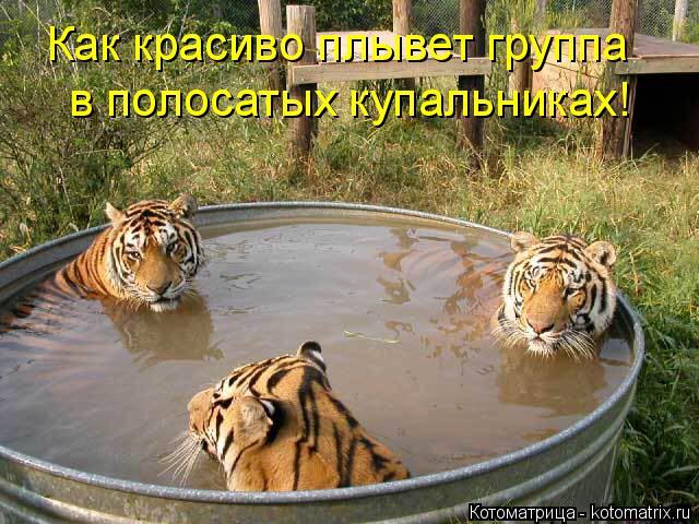 Котоматрица: Как красиво плывет группа в полосатых купальниках!
