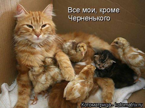 Котоматрица: Все мои, кроме Черненького