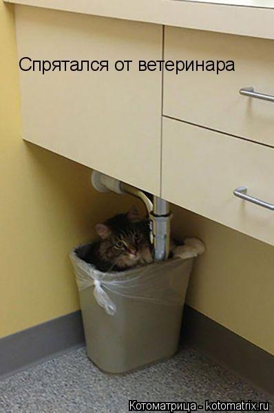 Котоматрица: Спрятался от ветеринара
