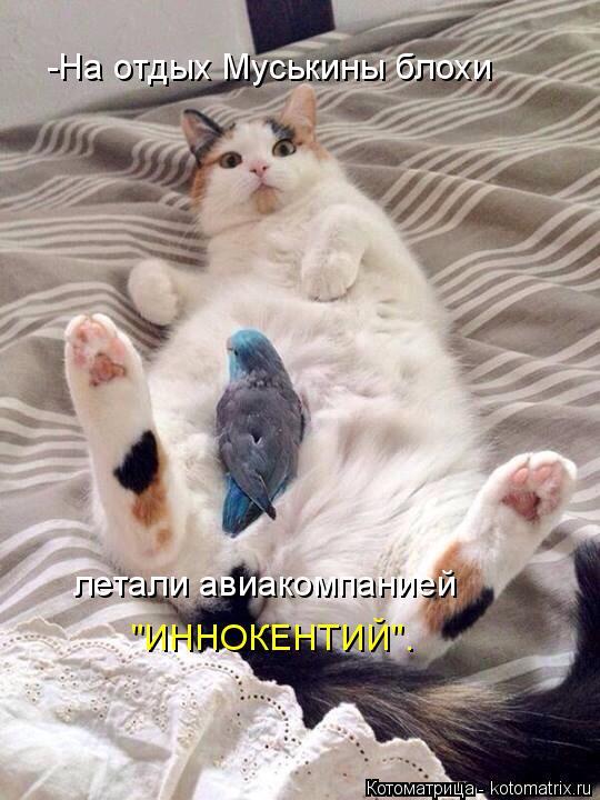 """Котоматрица: """"ИННОКЕНТИЙ"""". -На отдых Муськины блохи  летали авиакомпанией"""