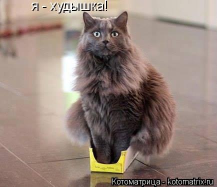 Котоматрица: я - худышка!