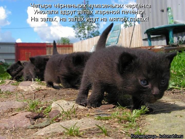 Котоматрица: Четыре чёрненьких чумазеньких чертёнка Унюхали вдруг запах жареной печёнки. На запах, на запах идут на мягких лапах!