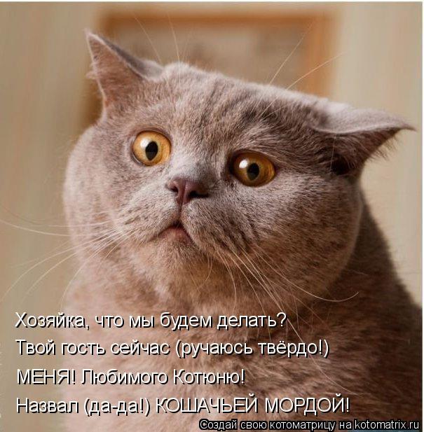 Котоматрица: Хозяйка, что мы будем делать? Твой гость сейчас (ручаюсь твёрдо!) МЕНЯ! Любимого Котюню! Назвал (да-да!) КОШАЧЬЕЙ МОРДОЙ!