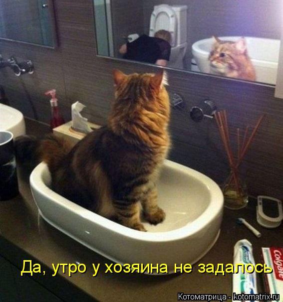 Котоматрица: Да, утро у хозяина не задалось