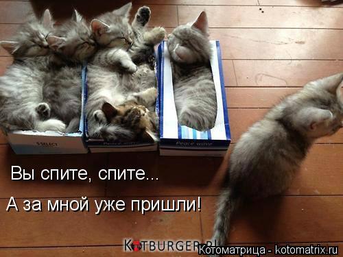 Котоматрица: Вы спите, спите... А за мной уже пришли!