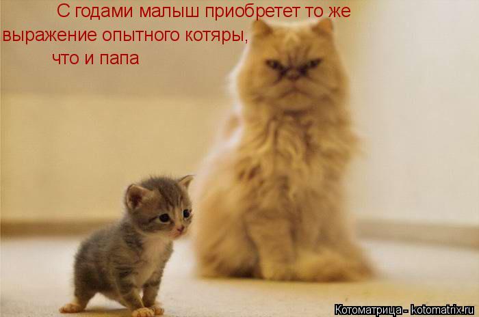 Котоматрица: С годами малыш приобретет то же выражение опытного котяры, что и папа