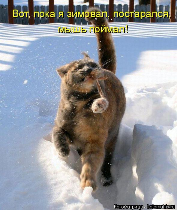 Котоматрица: мышь поймал! Вот, пока я зимовал, постарался,