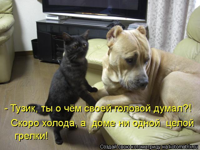Котоматрица: - Тузик, ты о чём своей головой думал?!  Скоро холода, а  доме ни одной  целой  грелки!
