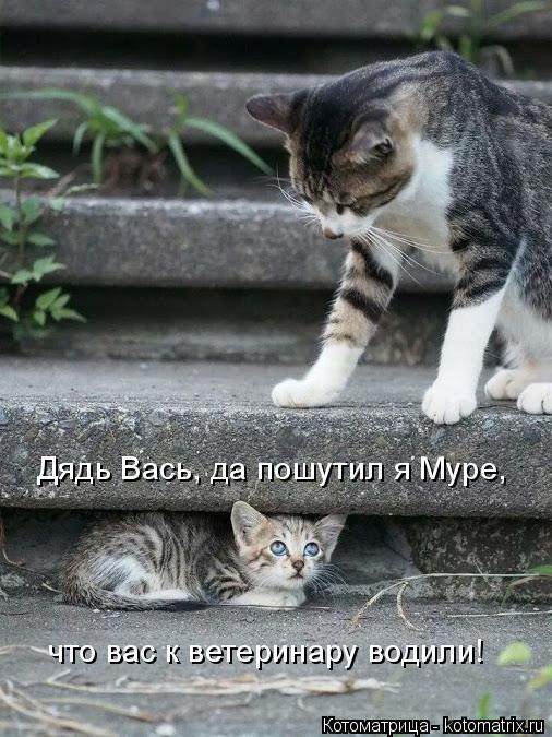 Котоматрица: Дядь Вась, да пошутил я Муре, что вас к ветеринару водили!