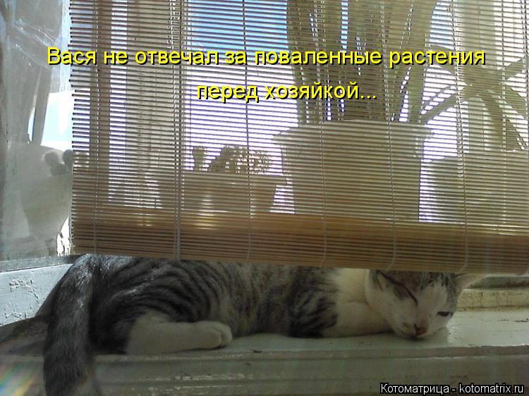 Котоматрица: Вася не отвечал за поваленные растения перед хозяйкой...