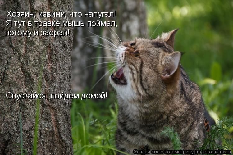 Котоматрица: Хозяин, извини, что напугал! Я тут в травке мышь поймал, потому и заорал! Спускайся, пойдем домой!