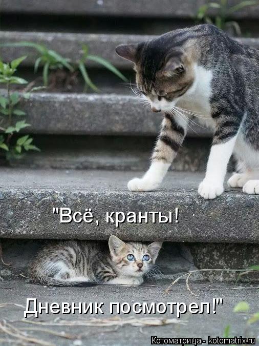 """Котоматрица: """"Всё, кранты! Дневник посмотрел!"""""""