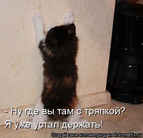Котоматрица: - Ну где вы там с тряпкой?  Я уже устал держать!