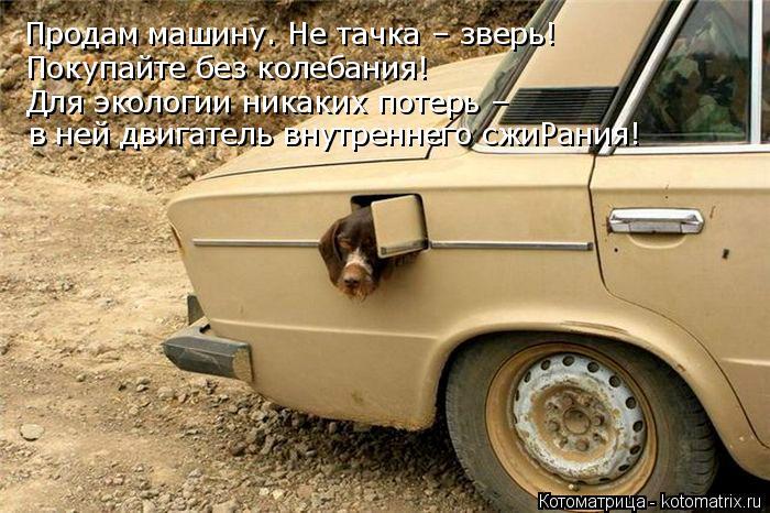 Котоматрица: Продам машину. Не тачка – зверь! Покупайте без колебания! Для экологии никаких потерь – в ней двигатель внутреннего сжиРания!