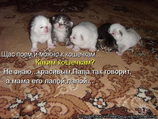 Котоматрица: Щас поем,и можно к кошечкам.... Каким кошечкам? Не знаю...красивым.Папа так говорит, а мама его лапой.лапой...