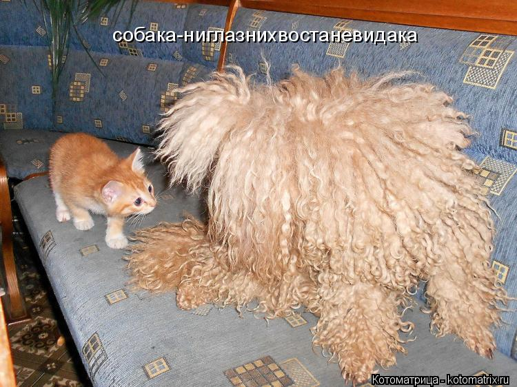 Котоматрица: собака-ниглазнихвостаневидака
