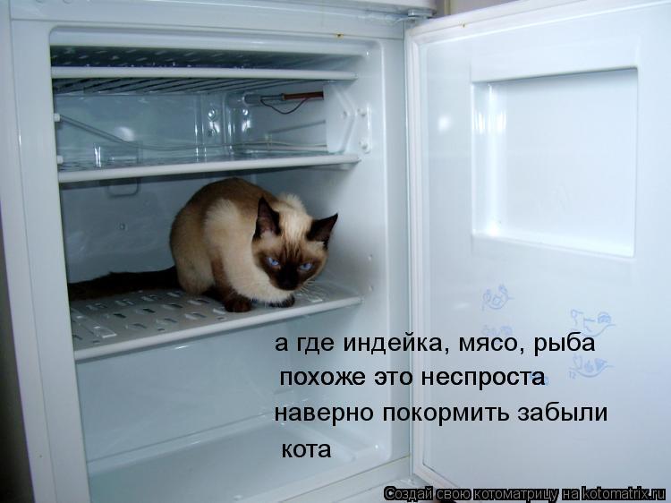 Котоматрица: наверно покормить забыли похоже это неспроста похоже это неспроста кота а где индейка, мясо, рыба