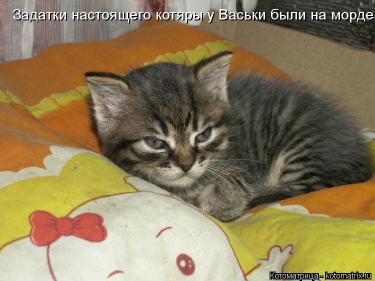 Котоматрица: Задатки настоящего котяры у Васьки были на морде!