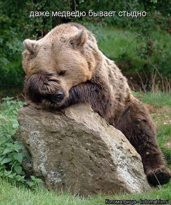 Котоматрица: даже медведю бывает стыдно