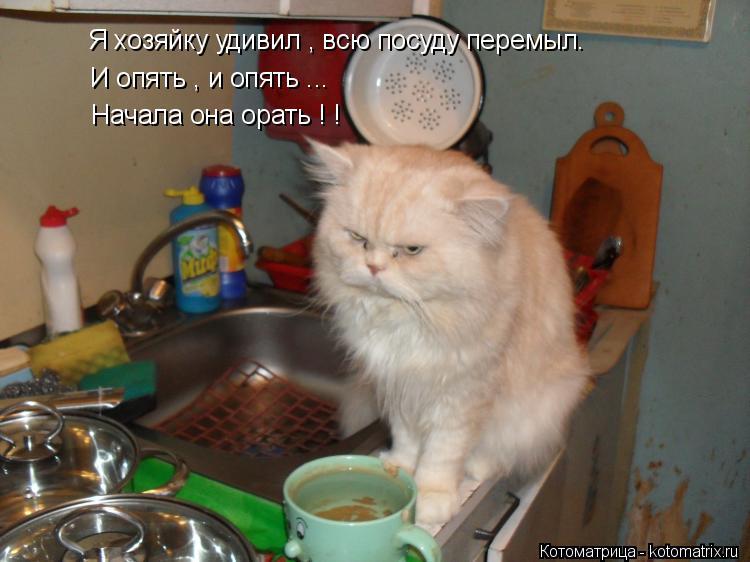 Котоматрица: Я хозяйку удивил , всю посуду перемыл. И опять , и опять ... Начала она орать ! !
