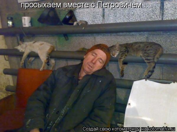 Котоматрица: просыхаем вместе с Петровичем...