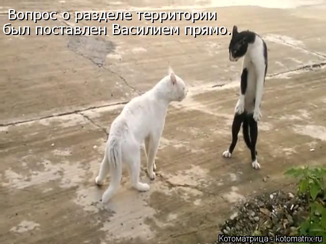 Котоматрица: Вопрос о разделе территории был поставлен Василием прямо.