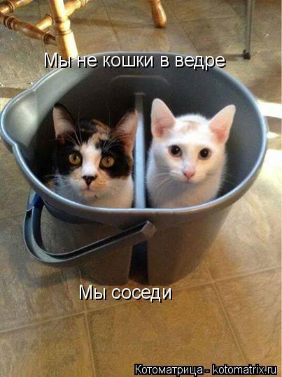 Котоматрица: Мы не кошки в ведре Мы соседи