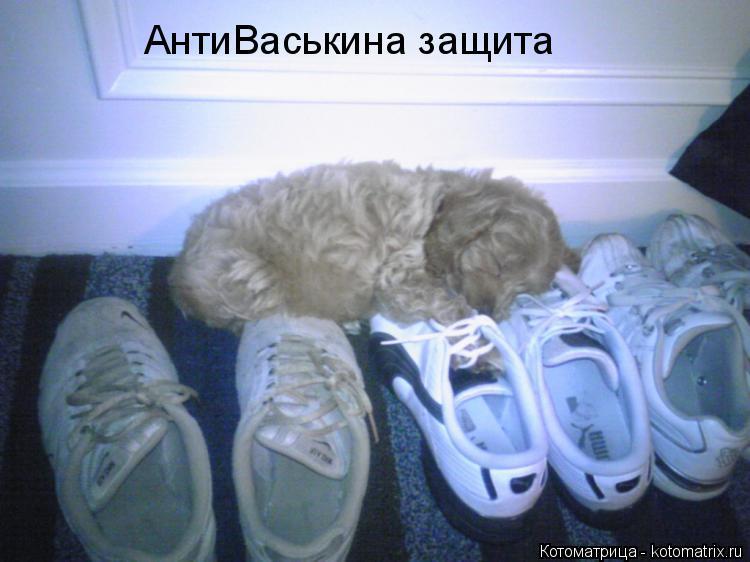 Котоматрица: АнтиВаськина защита