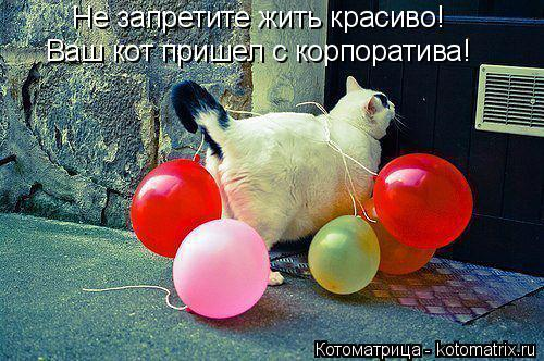 Котоматрица: Не запретите жить красиво! Ваш кот пришел с корпоратива Ваш кот пришел с корпоратива!