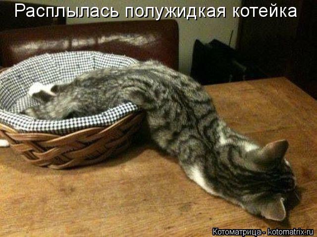 Котоматрица: Расплылась полужидкая котейка