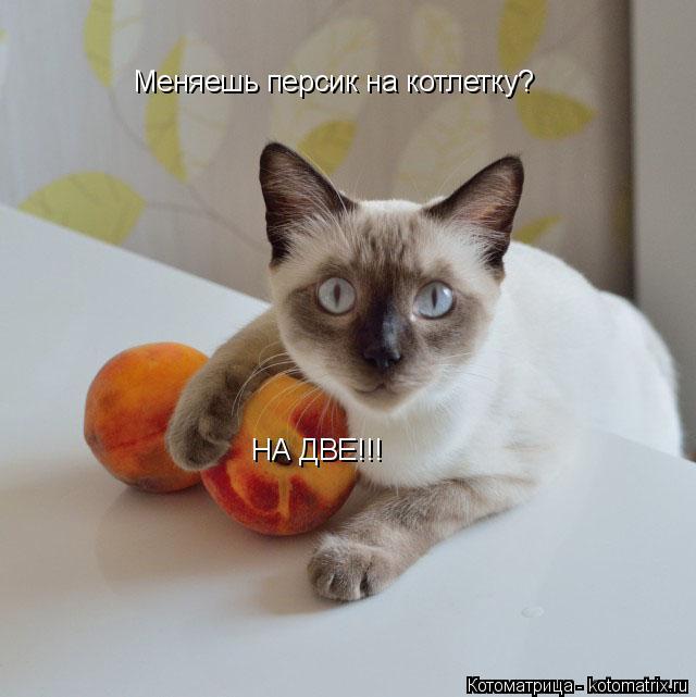 Котоматрица: Меняешь персик на котлетку? НА ДВЕ!!!