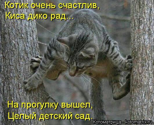 Котоматрица: Котик очень счастлив, Киса дико рад... На прогулку вышел, Целый детский сад.
