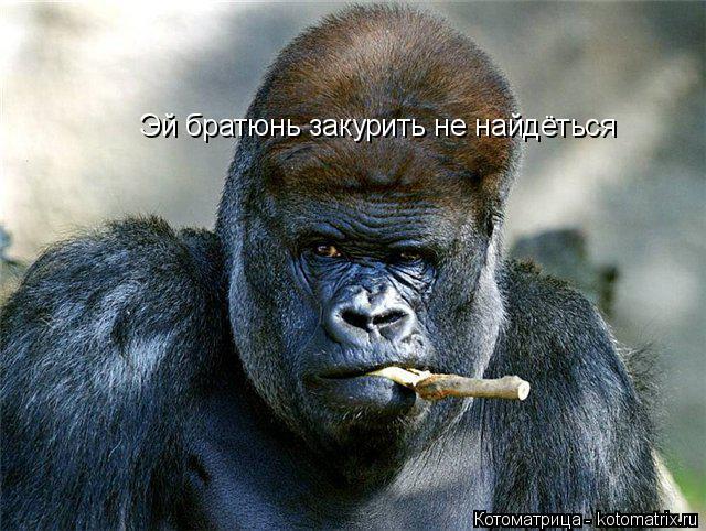 Котоматрица: Эй братюнь закурить не найдёться
