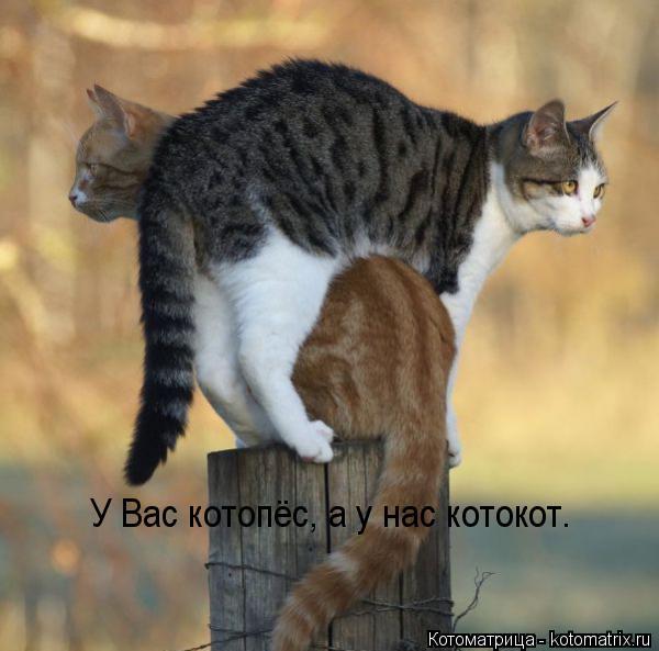 Котоматрица: У Вас котопёс, а у нас котокот.