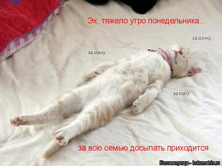Котоматрица: за всю семью досыпать приходится за маму... за папу... за дочку... Эх, тяжело утро понедельника...