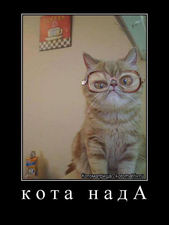 Котоматрица: кота надА